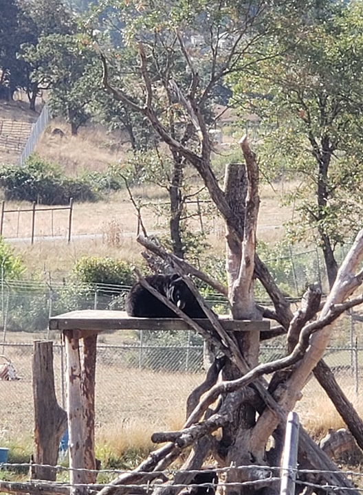 wildlife safar bear on stand